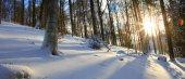 tramonto in un bosco dinverno