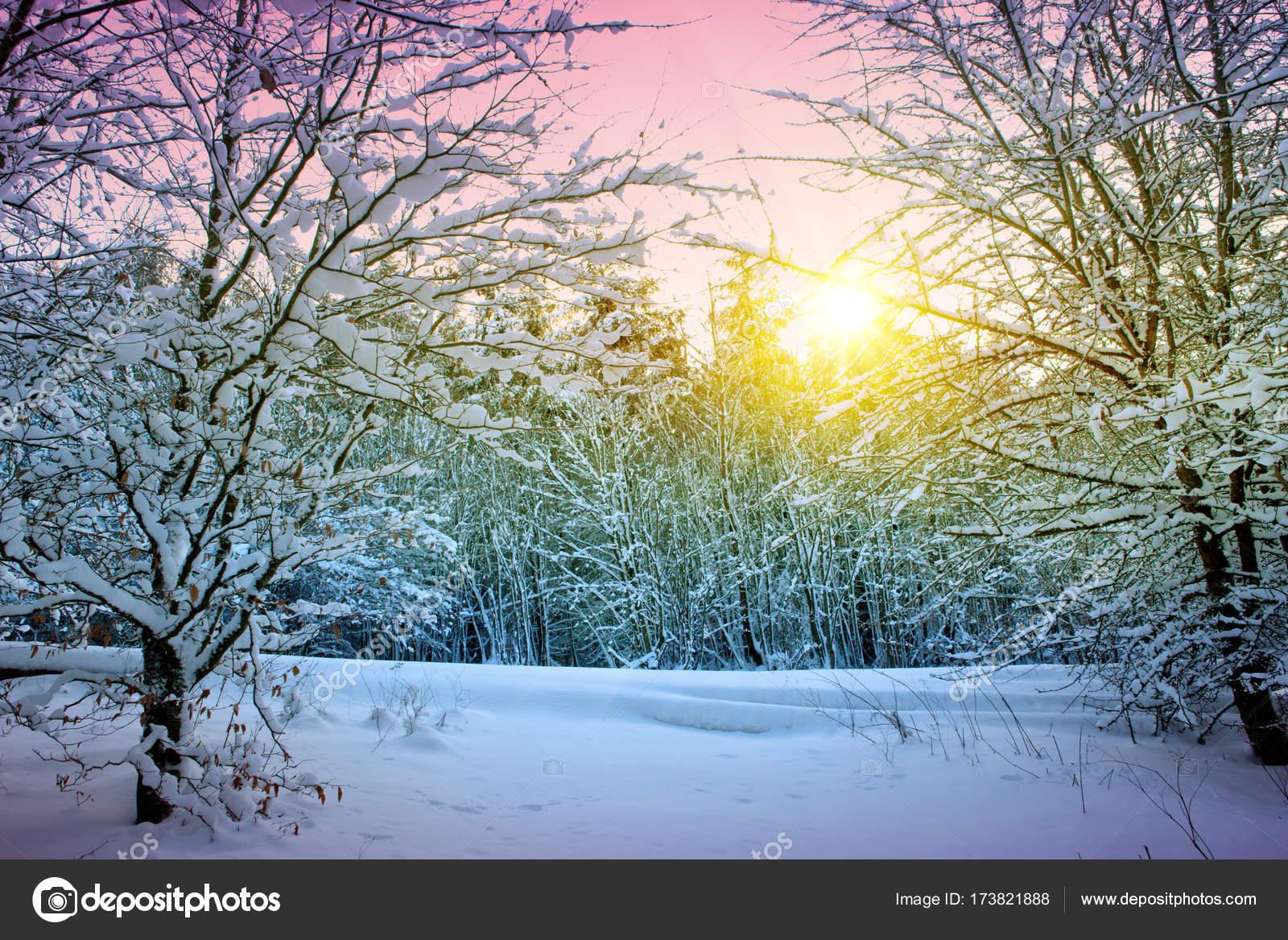 b ume mit schnee im winter sonnenuntergang winterlandschaft stockfoto swkunst 173821888. Black Bedroom Furniture Sets. Home Design Ideas