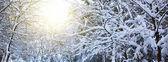 Stromy se sněhem v zimě. Zimní slunce krajina.
