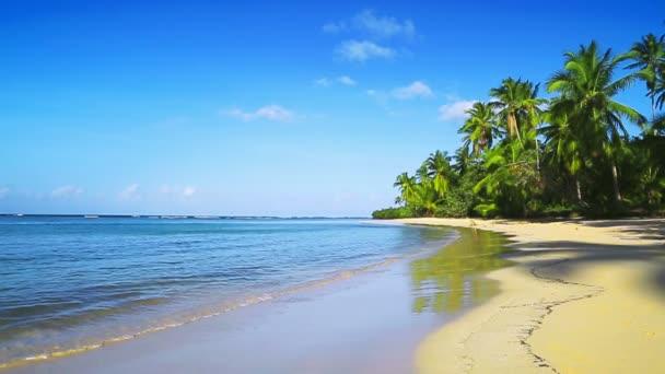Karibské moře a zelené palmy
