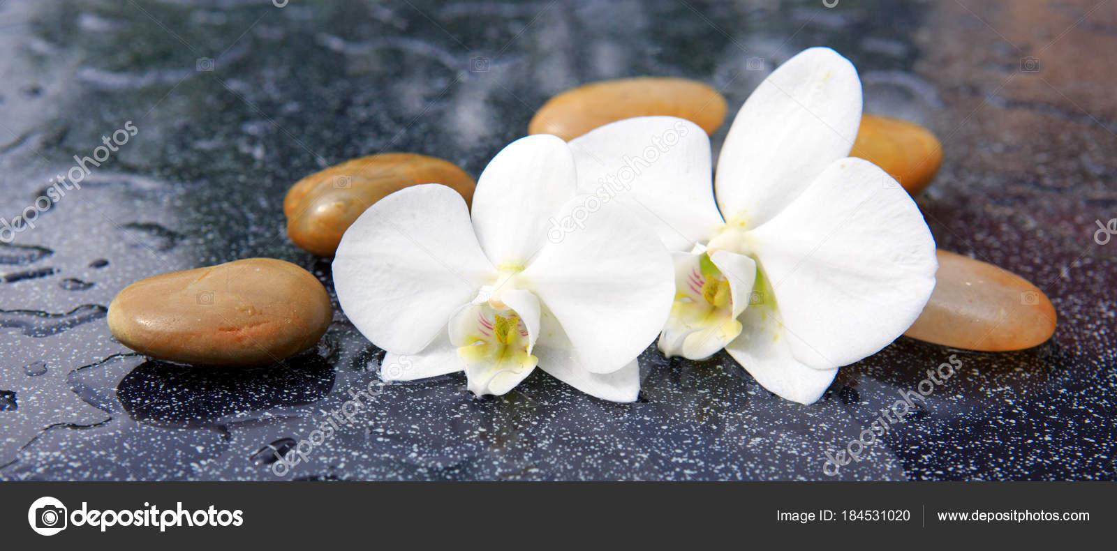 dos flores de orquídeas y piedras de spa fotos de stock swkunst