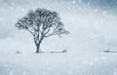einzelner Winterbaum auf dem Feld und Schneefall.