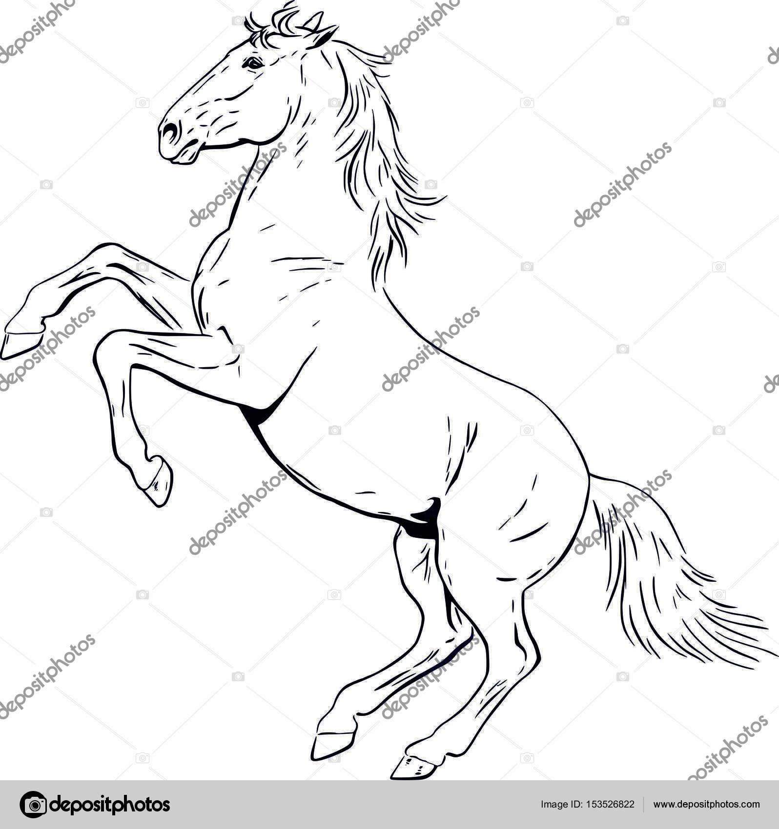 steigerend paard in contouren stockvector 169 arsanimalium
