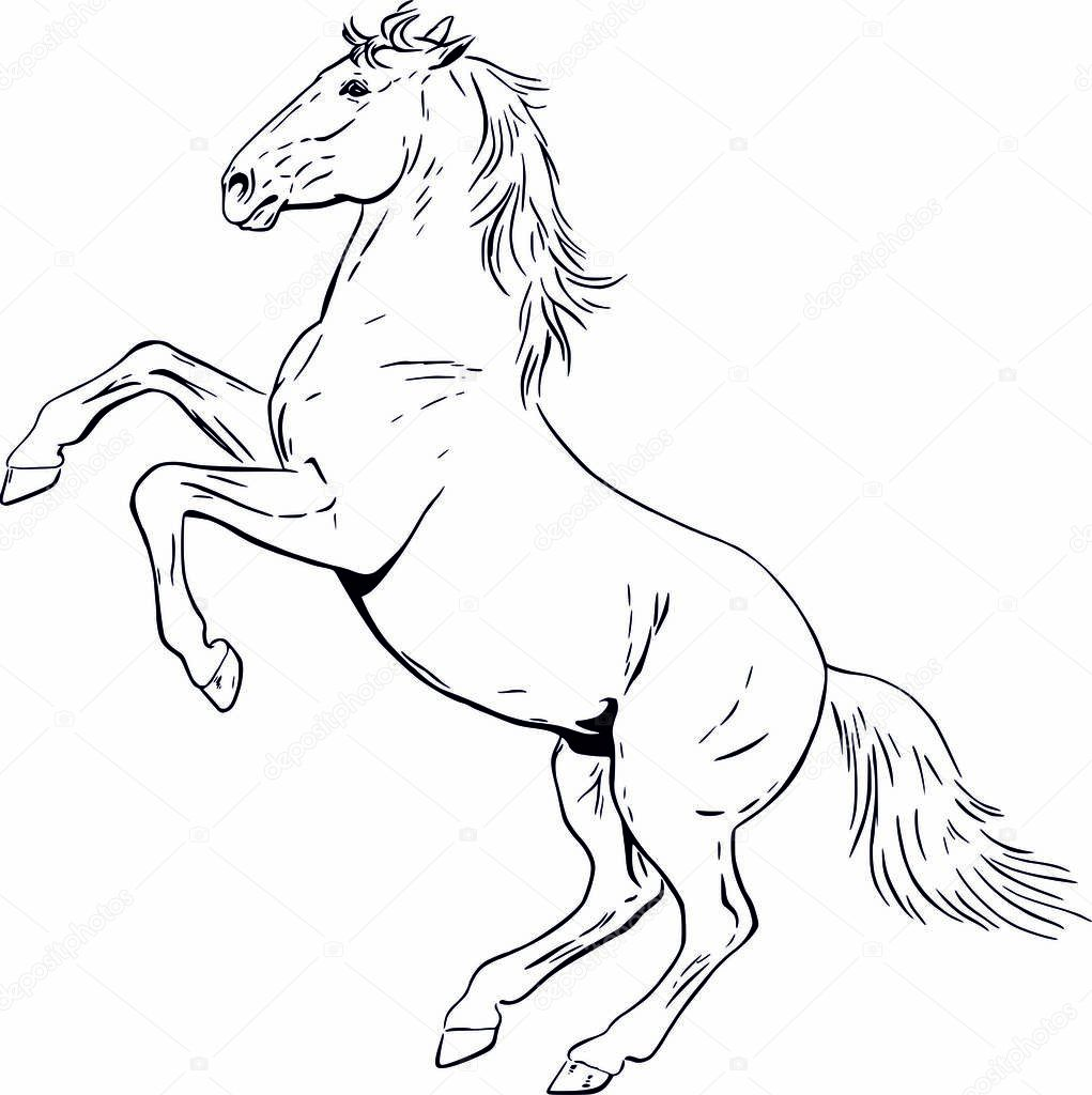 Horse Drawing In Graphic Contours In Dynamic Rearing Pose With Waving Mane And Tail Perfect For Your Website Printdesign For Clothes Shopping Bags Stickers Or As An Illustration For Coloring Book