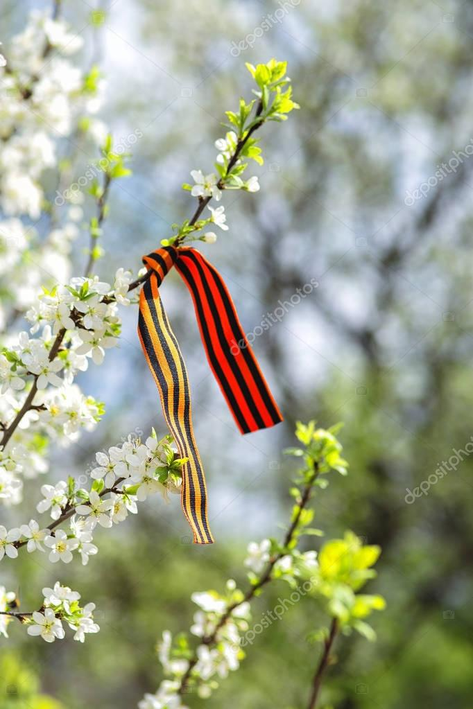 St. Georges ribbon on a blossoming branch