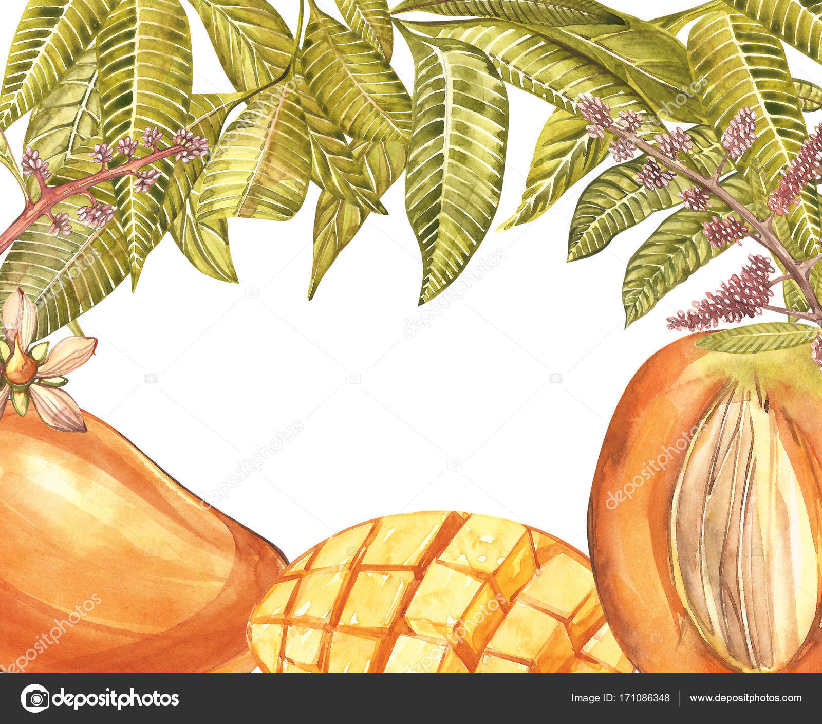Mango-Baum, Blumen, Vintage-Design-Vorlage. Aquarell botanische ...