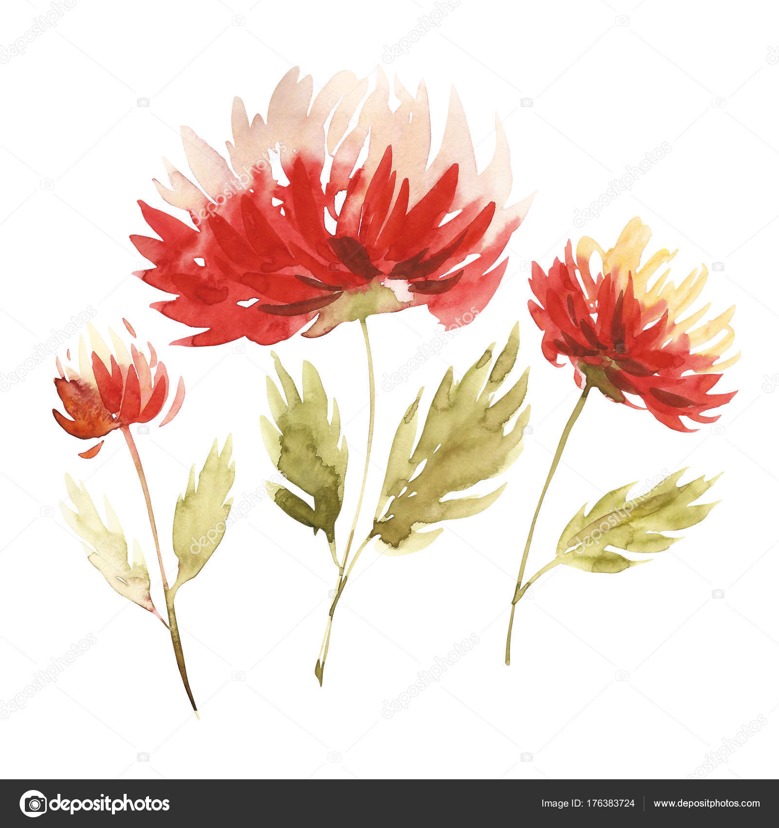 Flowers watercolor illustration. A bouquet with a big red aster and ...