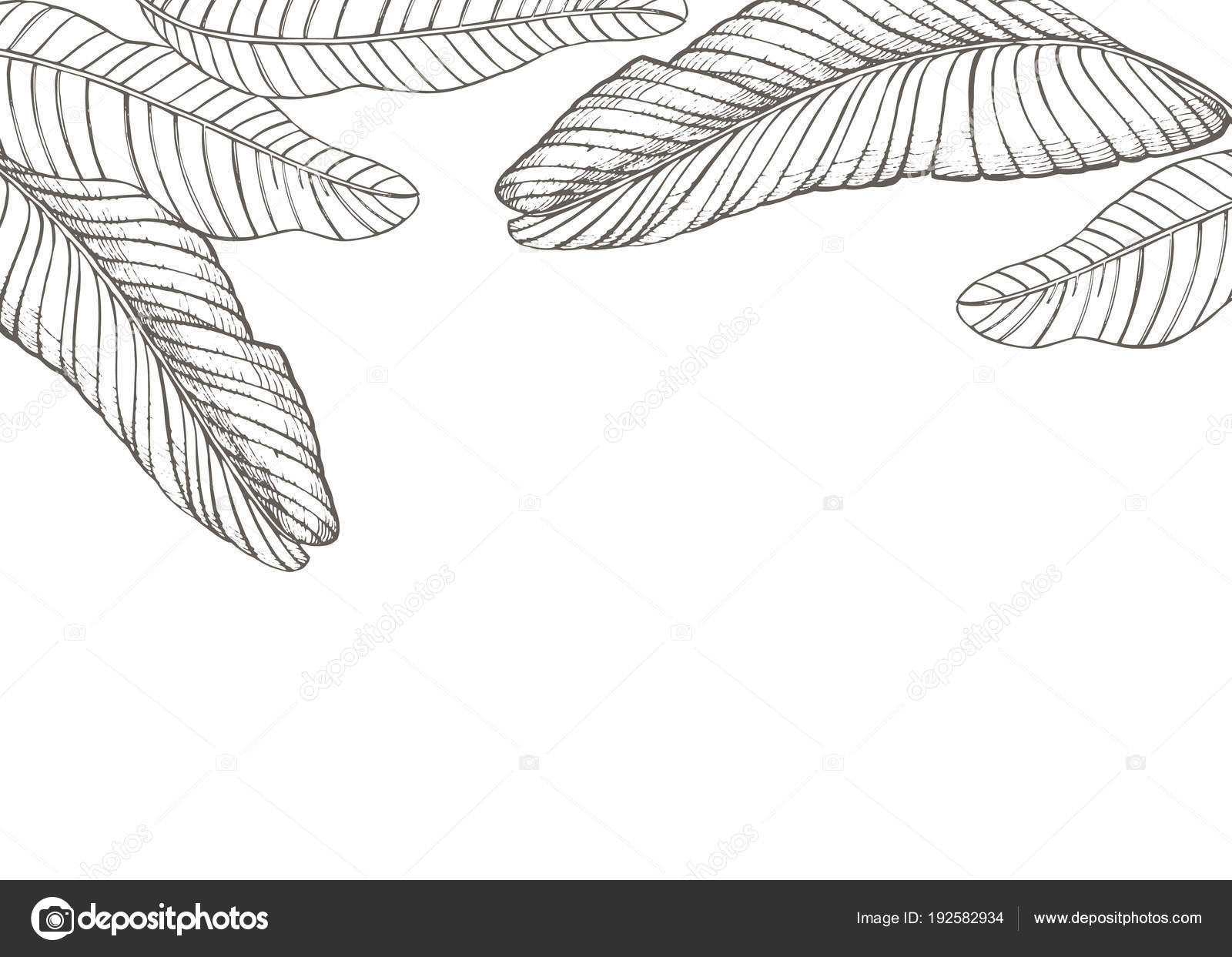 Summer tropical leaves vector design floral background illustration summer tropical leaves vector design floral background illustration invitation or card design with jungle stopboris Choice Image