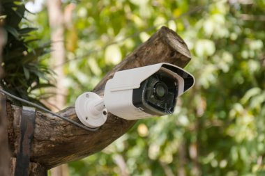 White CCTV installed on the tree which refer to harmony between technology and nature. CCTV hid on the tree to detect thief
