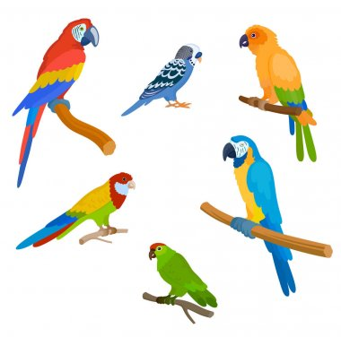 set of species of colorful parrots