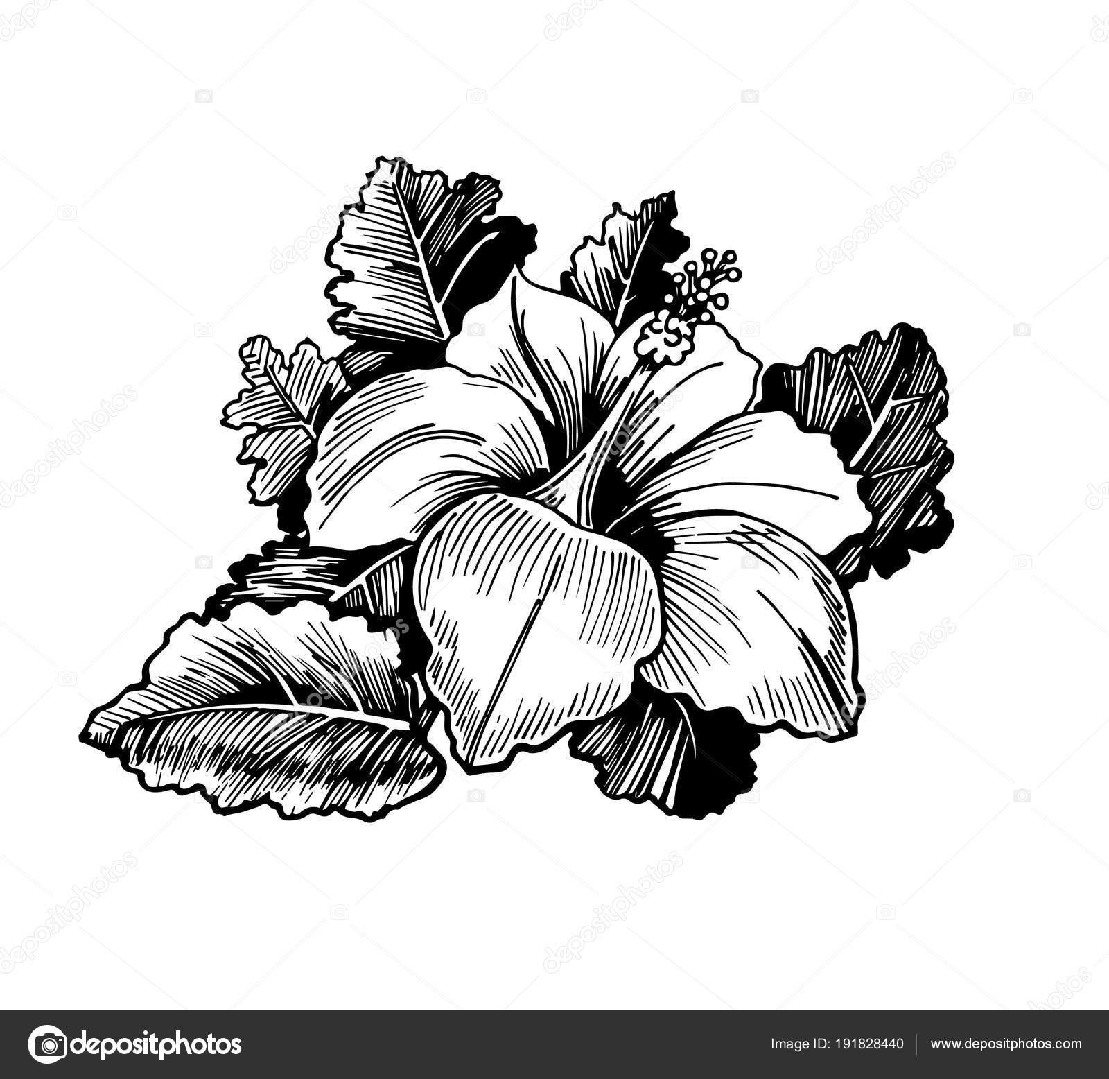 Dessin r aliste une fleur avec des feuilles illustration - Une fleur dessin ...