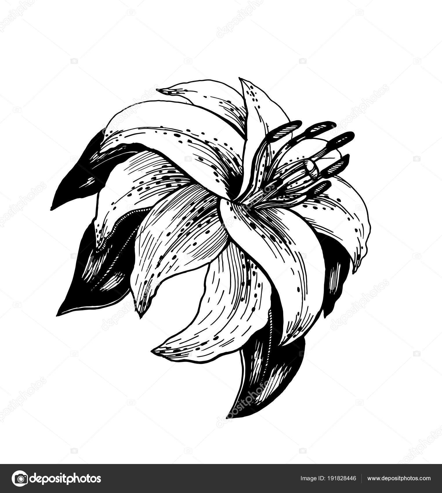 Dessin Realiste Une Fleur Avec Des Feuilles Style Art Deco Image