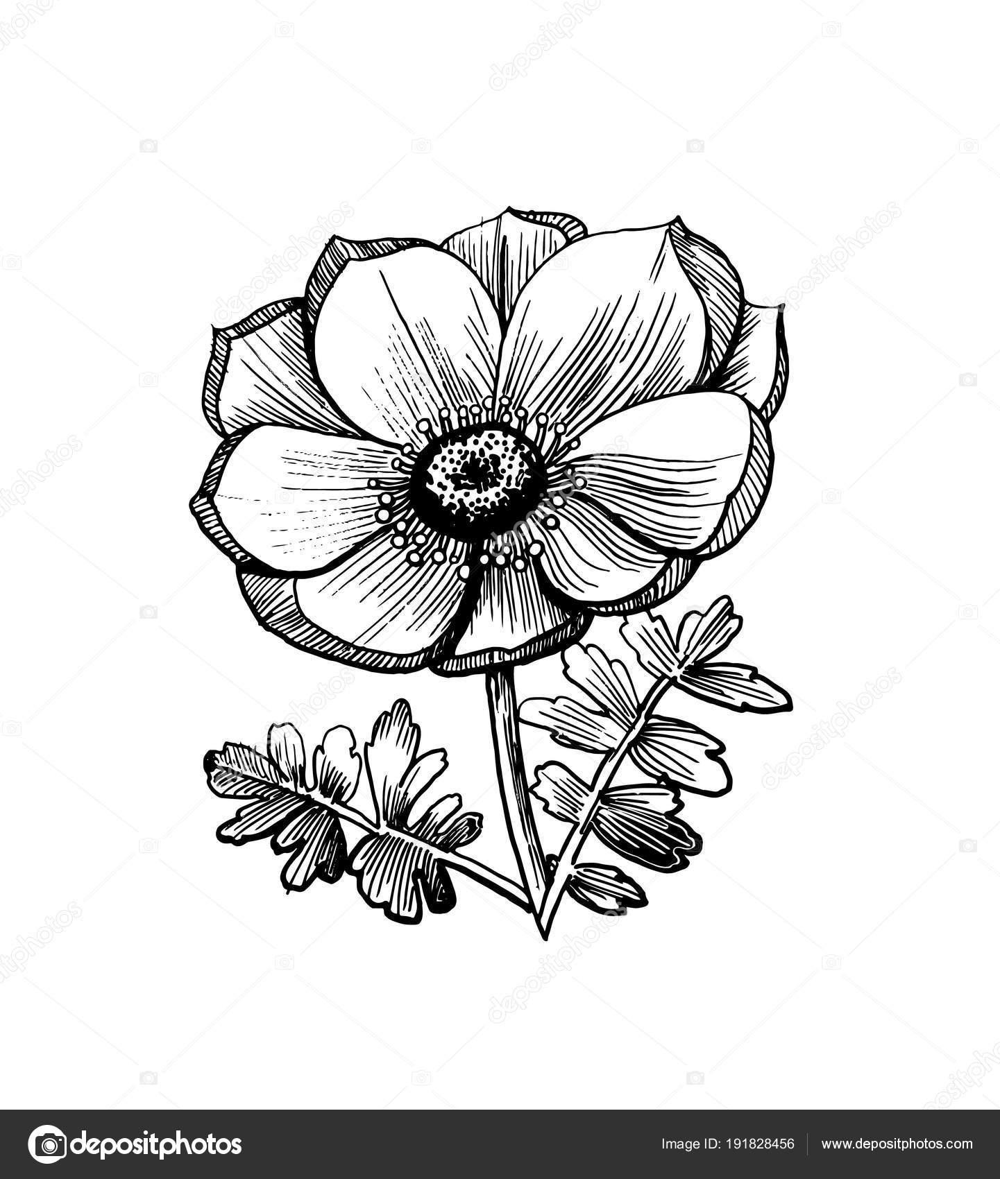 dessin r aliste une fleur avec des feuilles illustration dessin s main image vectorielle. Black Bedroom Furniture Sets. Home Design Ideas