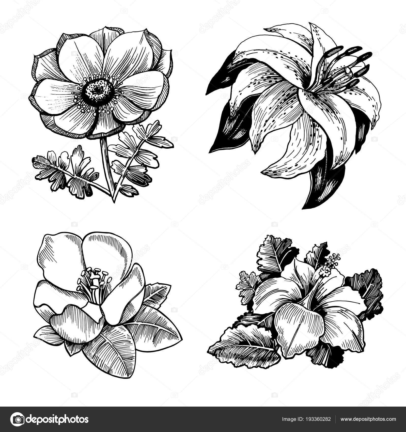 Conjunto Dibujos Realistas Flores Con Hojas Ilustracion Dibujado
