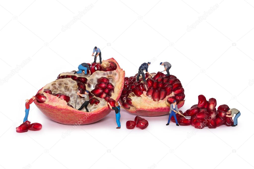 Miniature workers take out the seeds of the pomegranate. Break pomegranates.