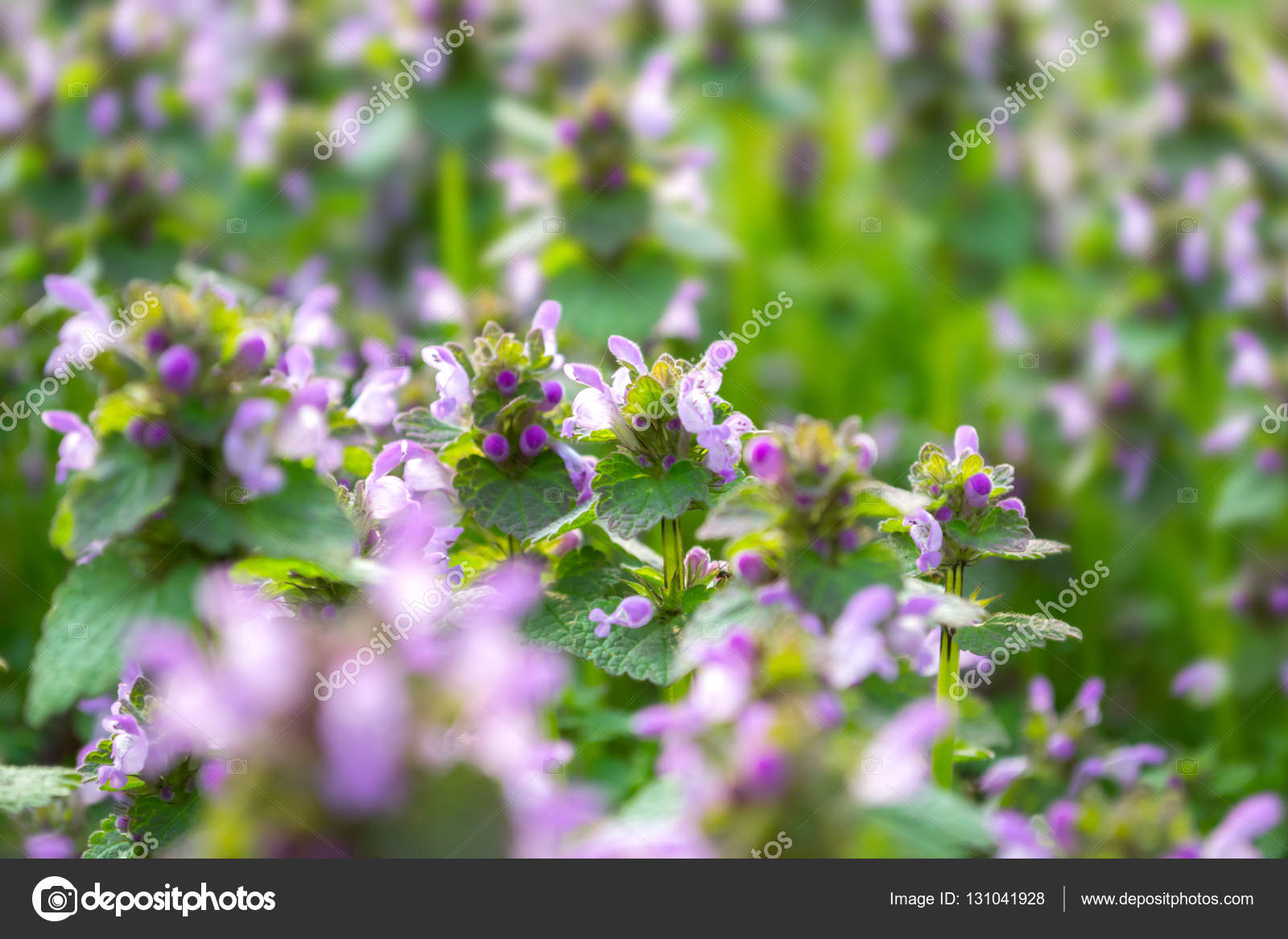 Small spring flowers pink spring flowers flowers on the meadow small spring flowers pink spring flowers flowers on the meadow stock photo mightylinksfo