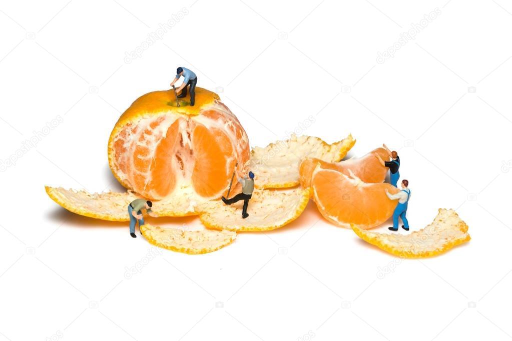 Miniature workers remove the peel mandarins. Teamwork. Tangerines isolated.