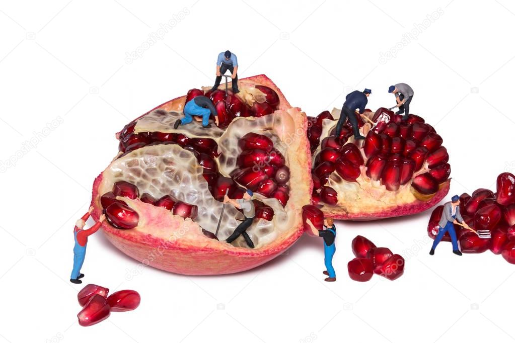 Miniature workers take out the seeds of the pomegranate.
