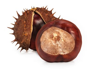 Two glossy brown conkers