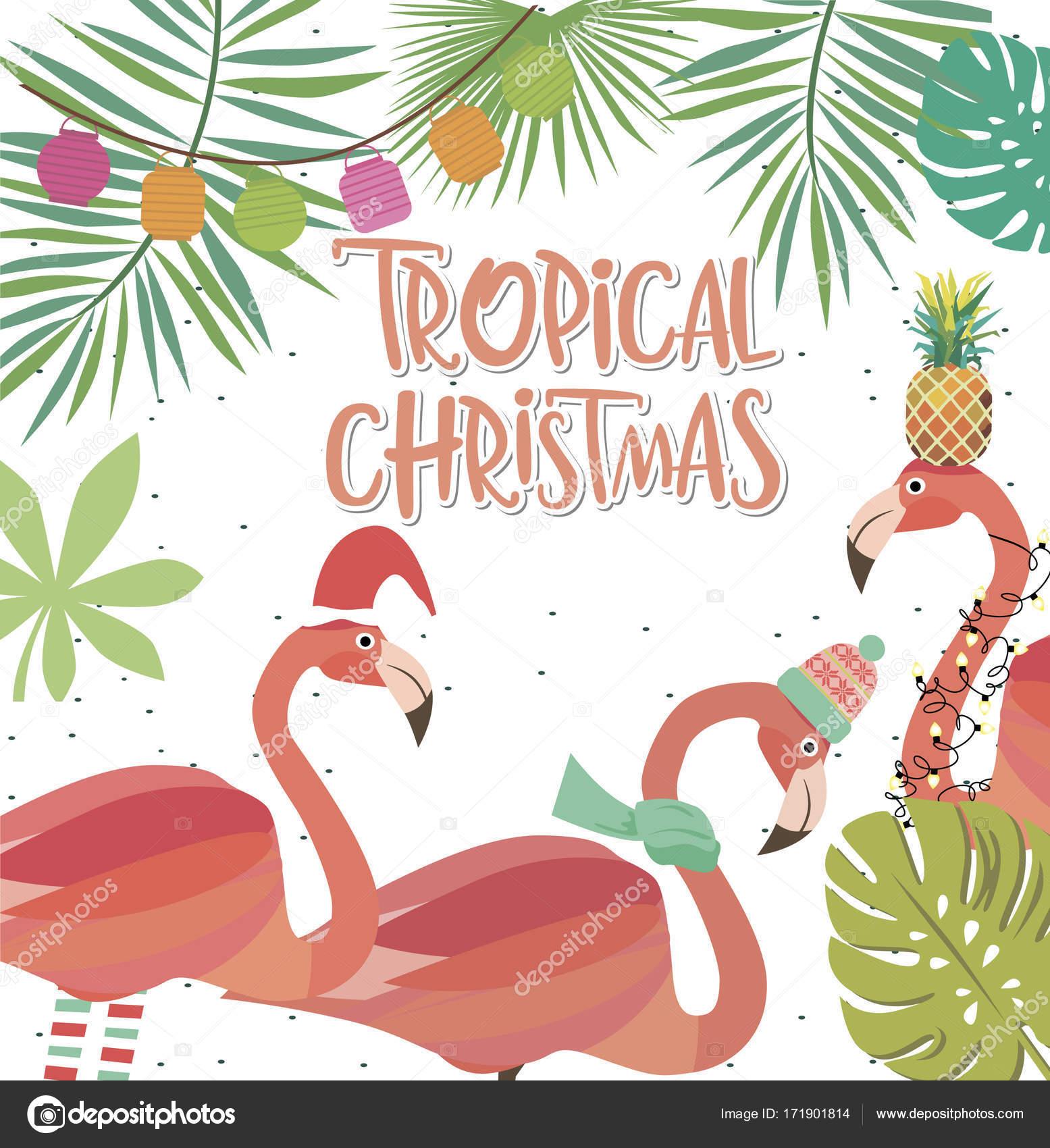 Tropical Christmas.Tropical Christmas Greeting Card Stock Vector C Miobuono12