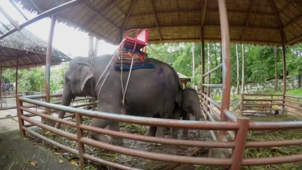 Elephants on elephant farm