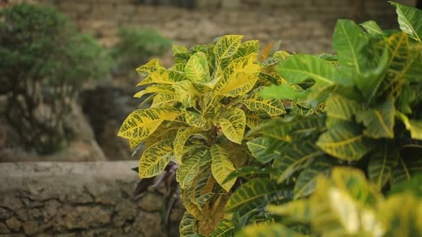 rostliny v zahradě