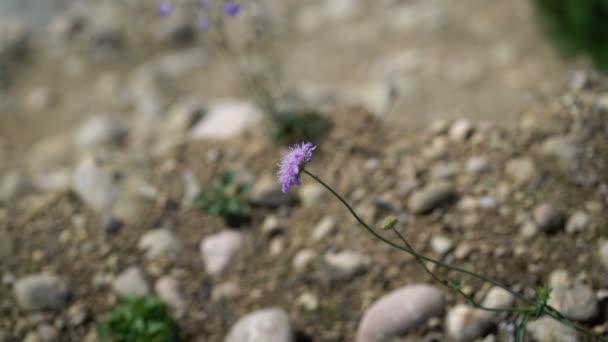 Fialový květ na kamenech