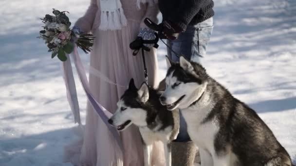 Muž a žena s dvěma psy husky