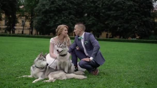 Menyasszony és a vőlegény a husky kutyák