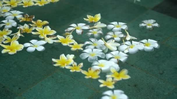 Weiße und gelbe Blumen im Schwimmbad
