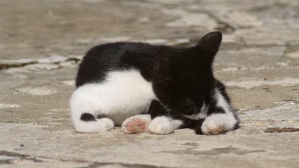 Fekete-fehér cica nyalja a bundáját