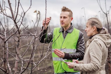 Agronomist or farmer examine trees in orchard. Ecology, profession and agrocultural concept