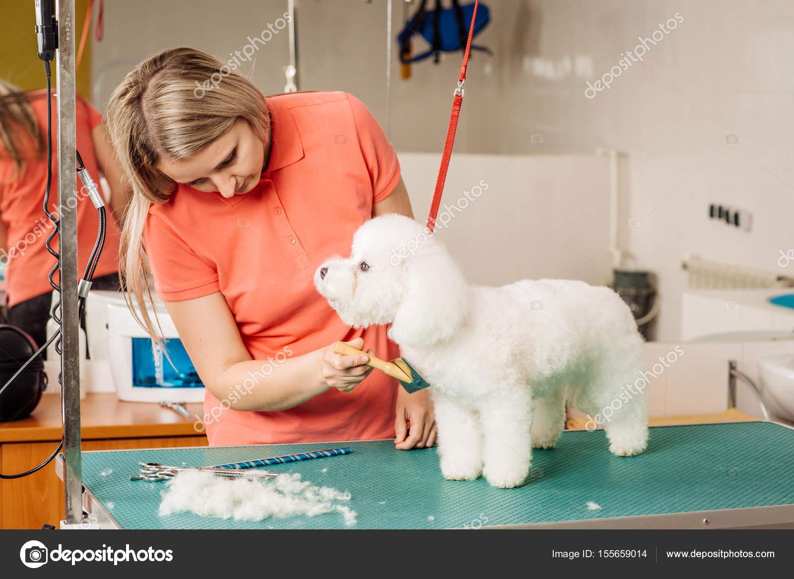 Kletterausrüstung Für Hunde : Hund mit werkzeug pflege zur fachbildung haar u2014 stockfoto
