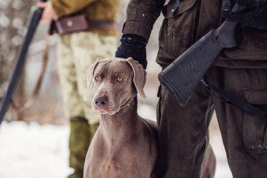 Avcı ve weimaraner köpeği bir nehir kış avcılık s