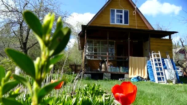 Landhaus im Frühling, rote Tulpen
