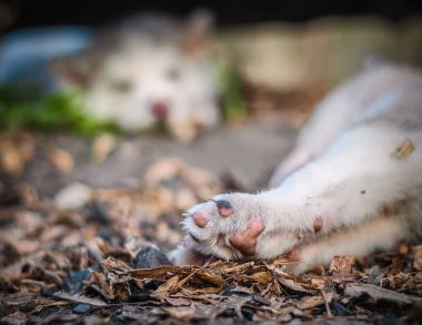 Close-up paws of a sleeping puppy in the forest