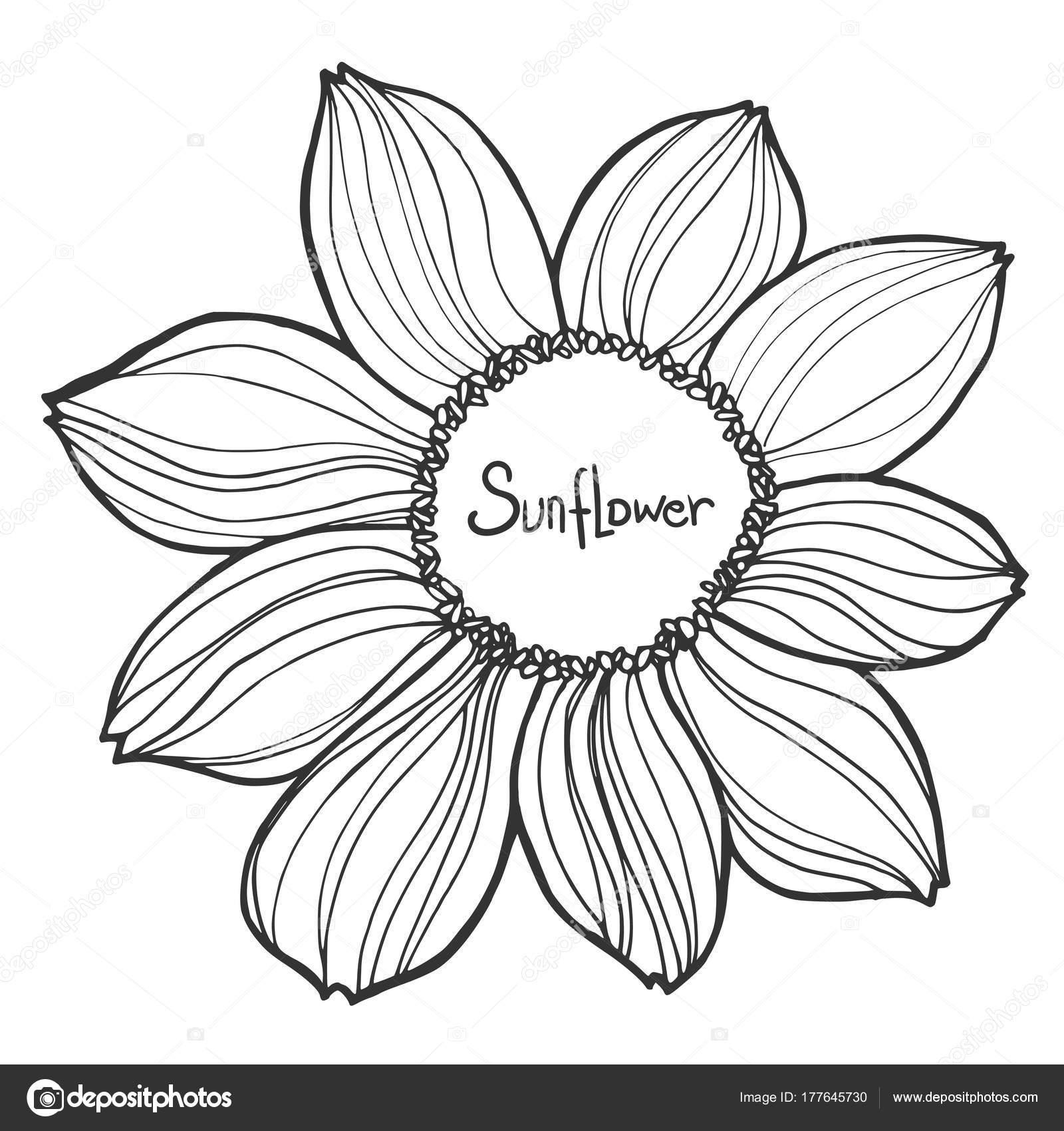 Dibujos Ilustración De Girasol En Blanco Y Negro Girasol Hermosa