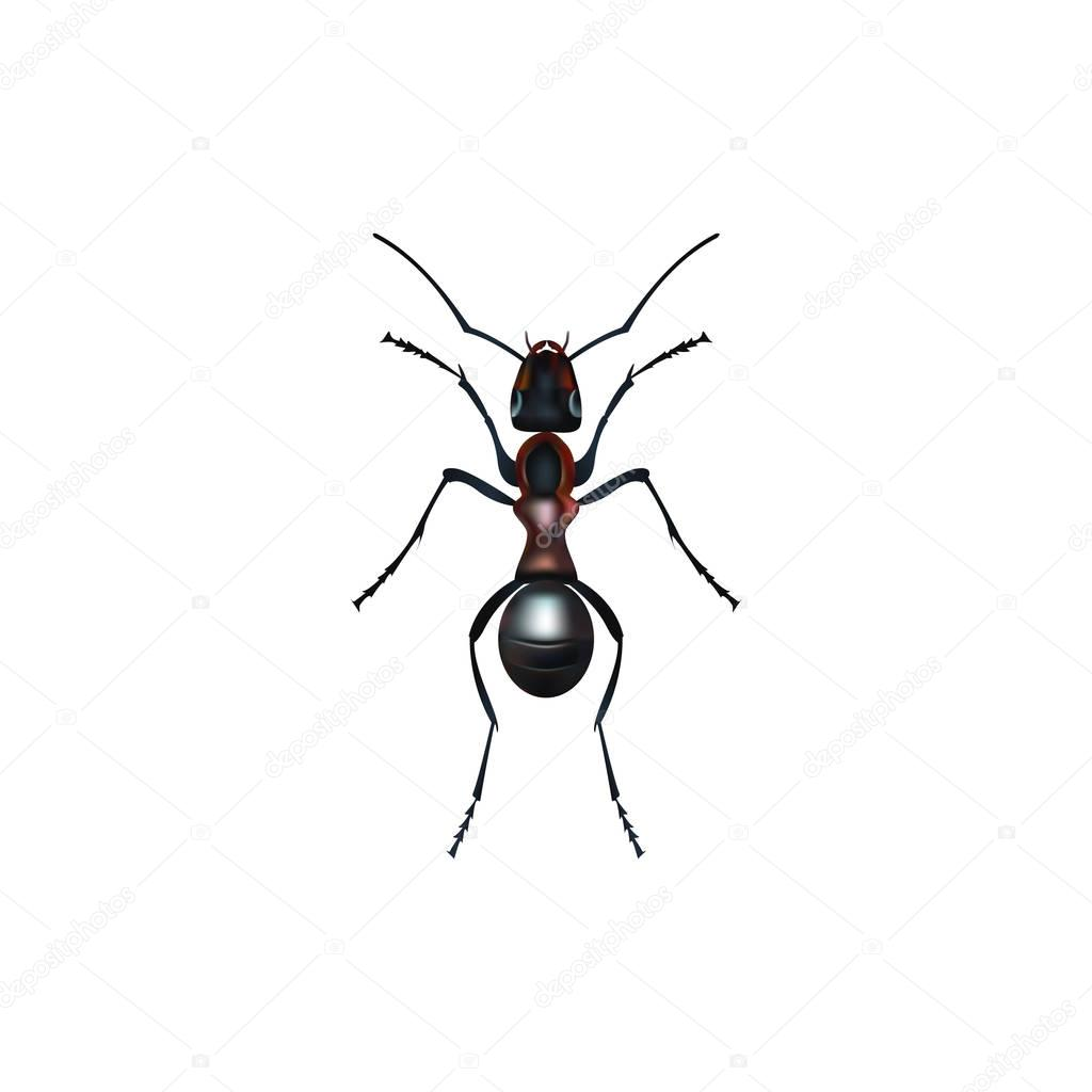 Insect realistic ant isolated on white background vector illustration
