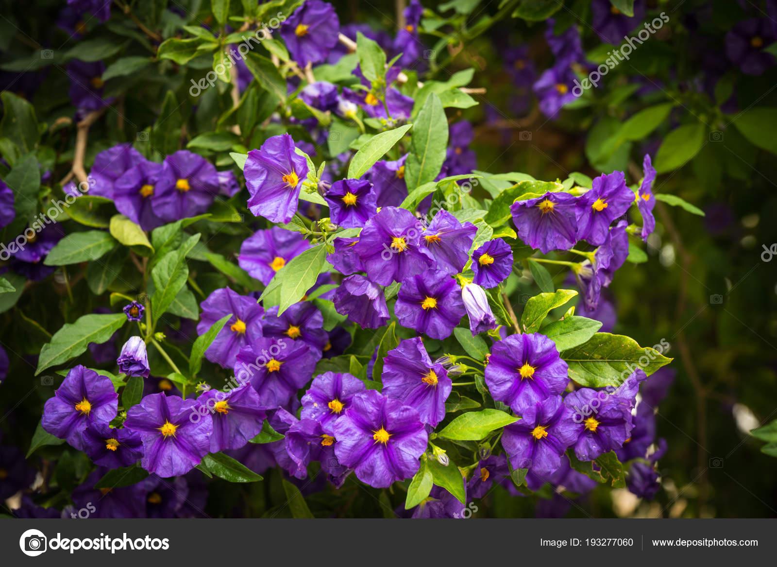 schönen frühlingsblumen und pflanzen in griechenland — stockfoto