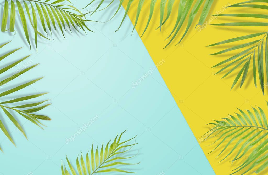 Tropical palm leaves on yellow and light blue background. Minima