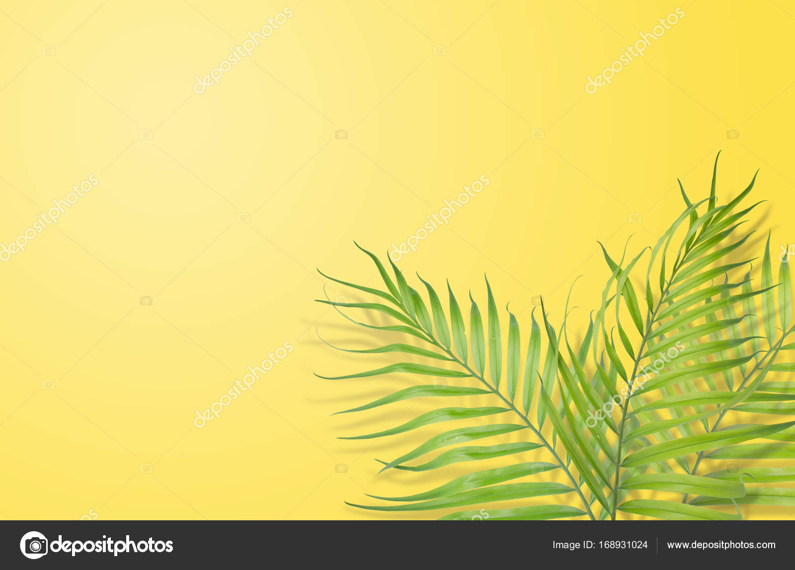 Tropical Palm Leaves On Yellow Background Minimal Nature Summe Stock Photo C Kittikornph 168931024 831 tropical leaves white background stock illustrations and clipart. https depositphotos com 168931024 stock photo tropical palm leaves on yellow html