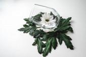 bílá květina ve sklenici s listy na bílém stole. boční pohled