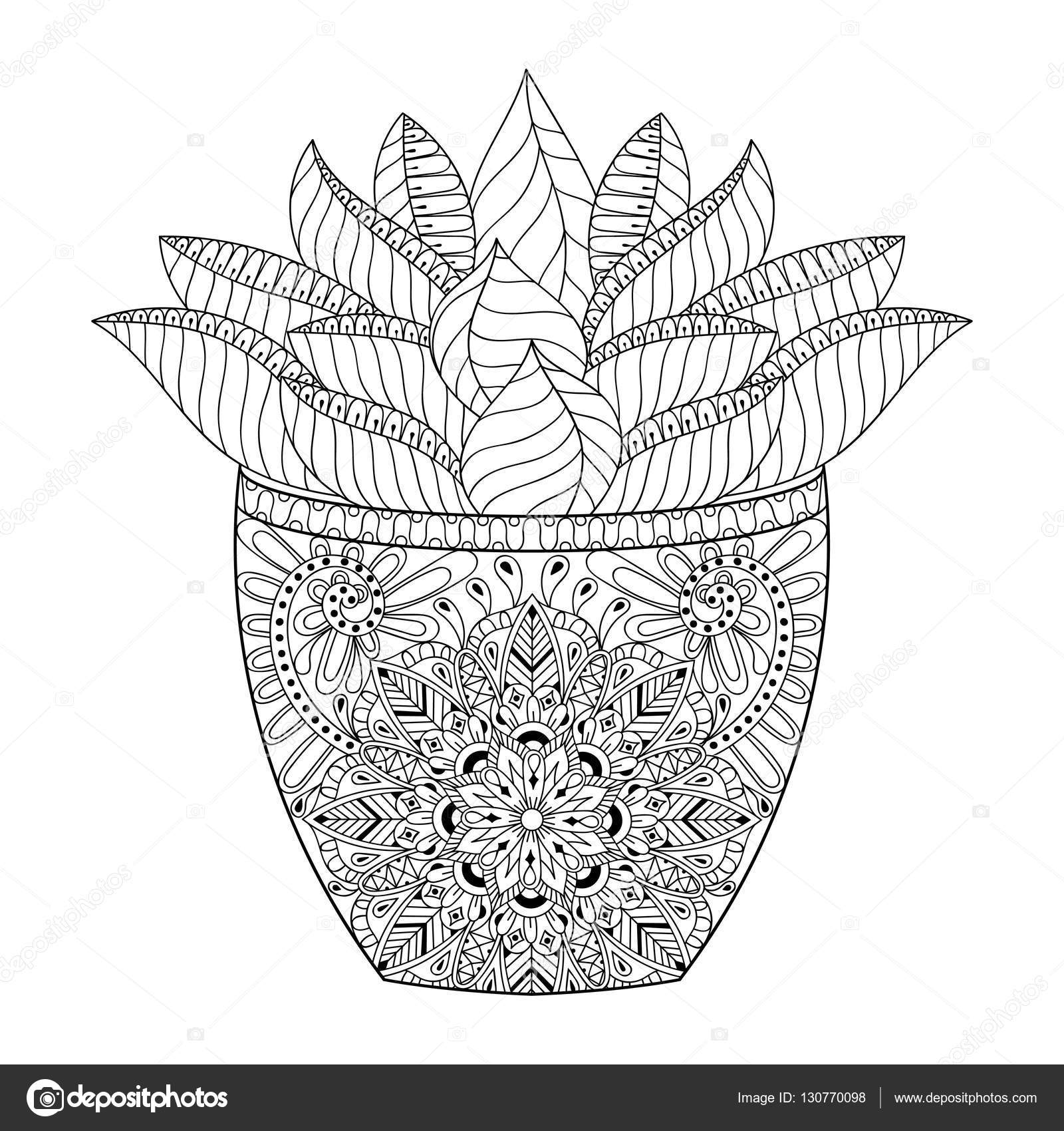 zentangle succulent cactus vector illustration hand drawn