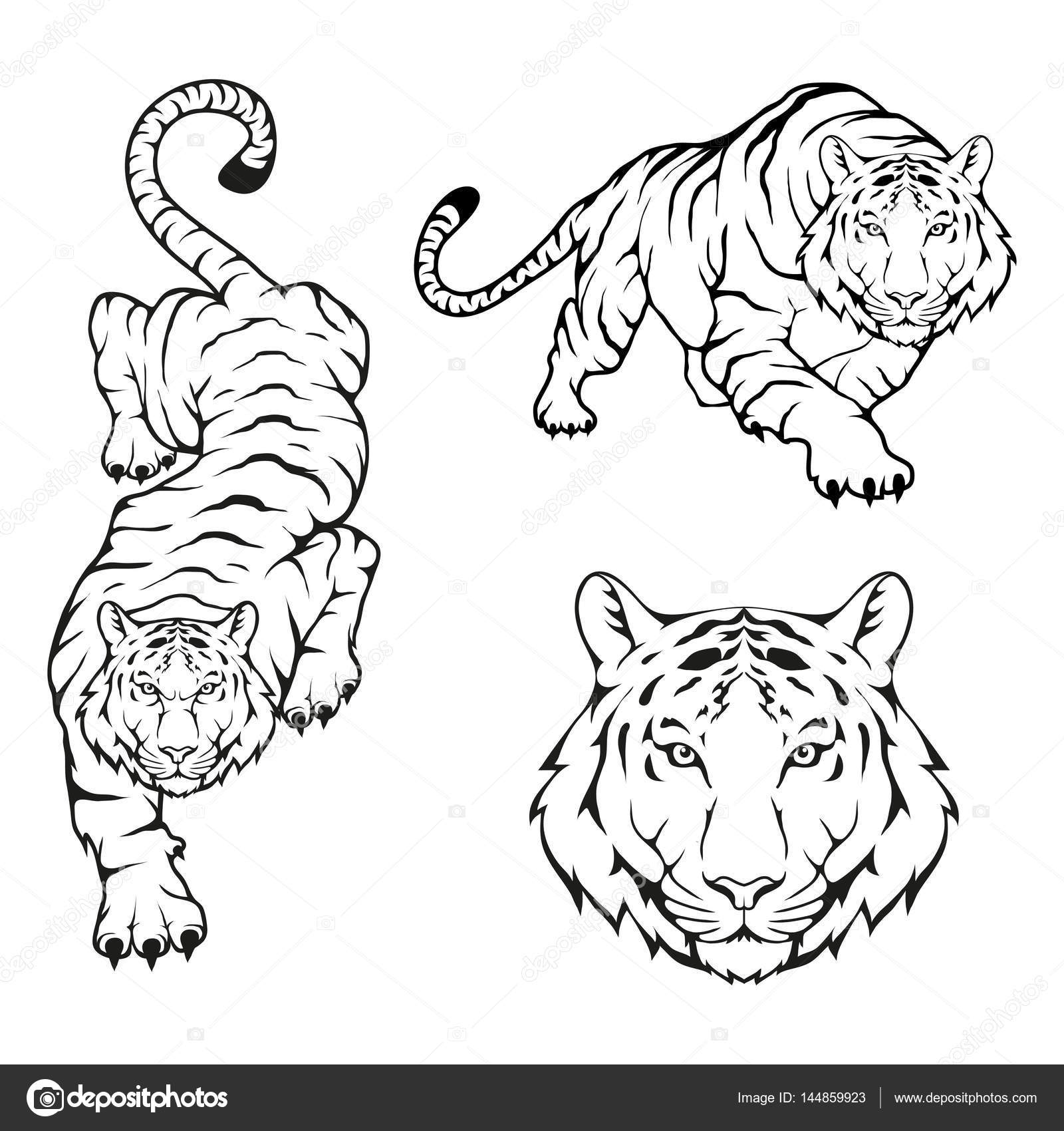 60 Tiger Shape Templates Crafts Colouring 5