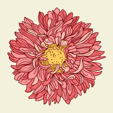 Illustration with chrysanthemum. Freehand drawing