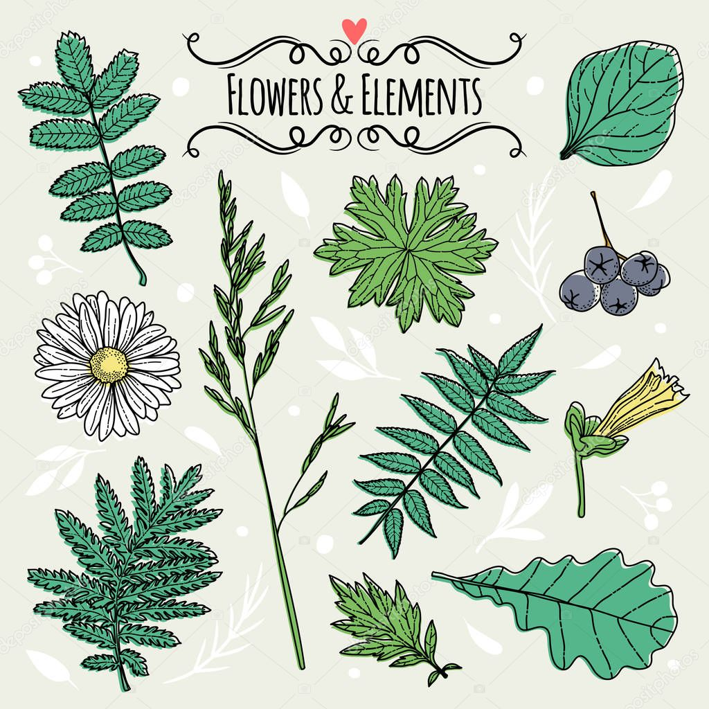 Set of illustrations of plants.