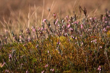Flowers with grass on spring meadow