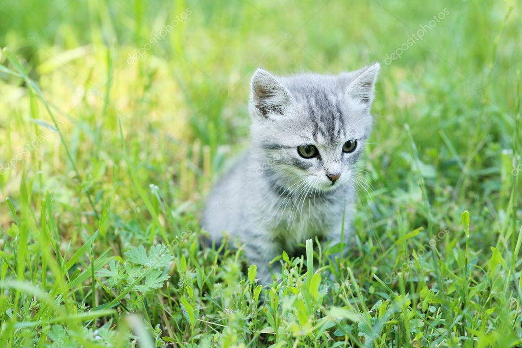 Plein de photos de chatte