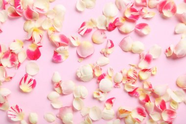Rose petals on background