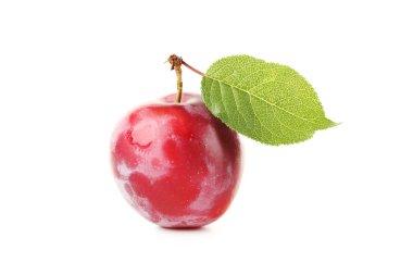 Fresh tasty plum